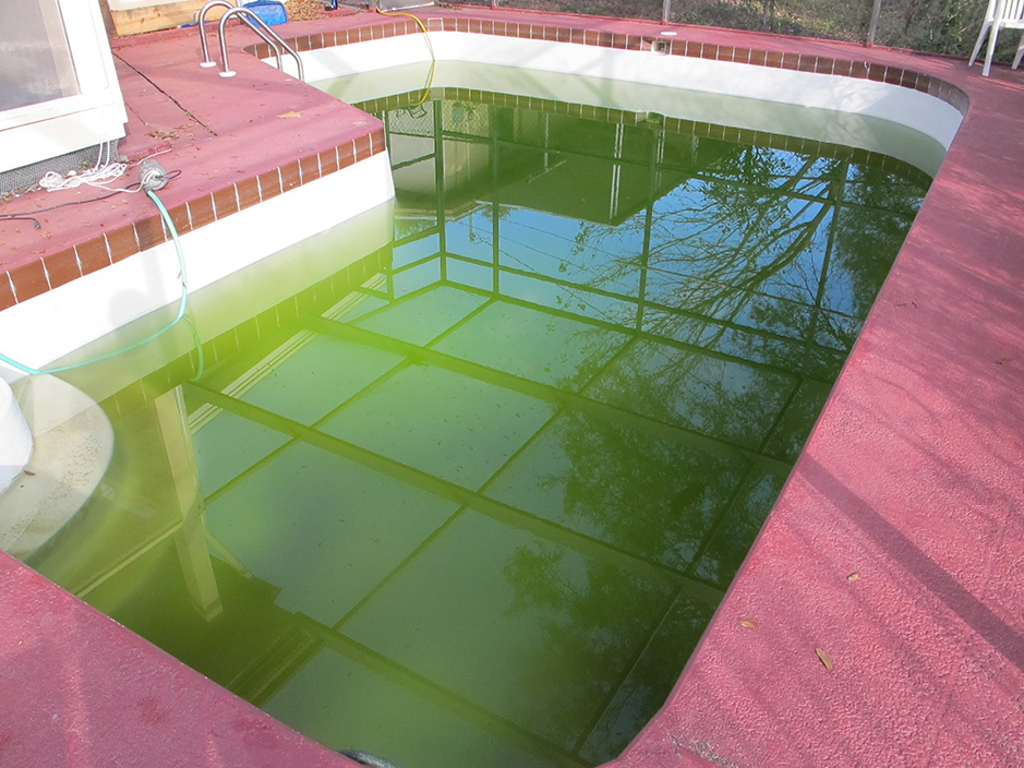 swimming-pool-cleaning-green-water