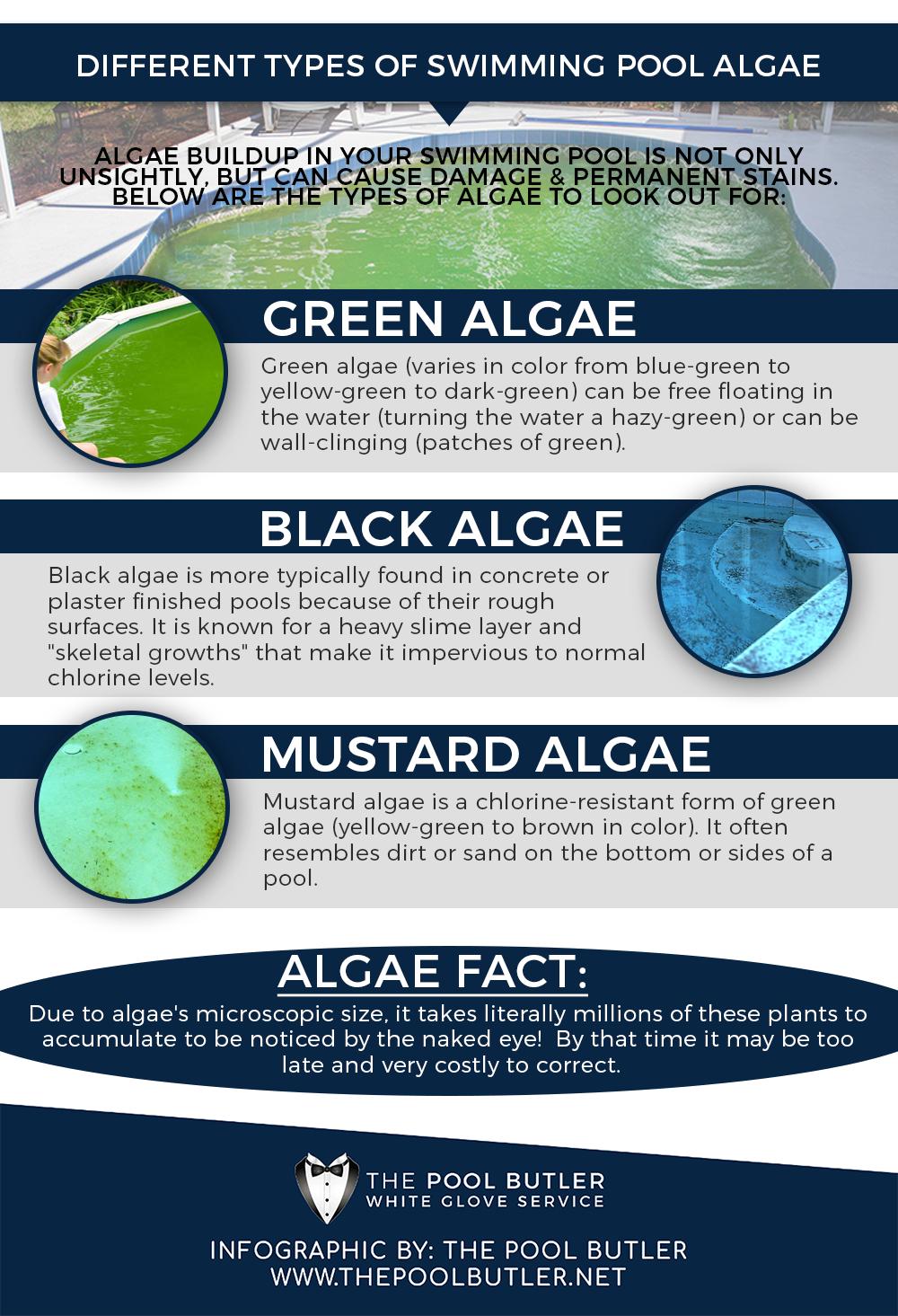 algaeinfographic