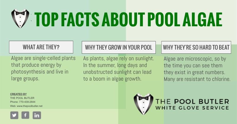 Why Swimming Pool Algae Removal Is Best Left To The Professionals [infographic]