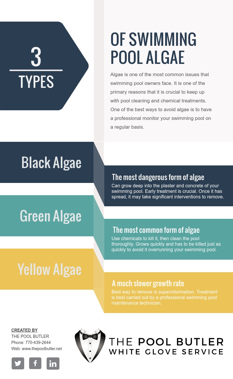 Exploring The Types Of Swimming Pool Algae [infographic]